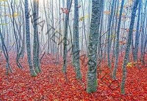 Autumn in a forest in Gilan province, Iran.
