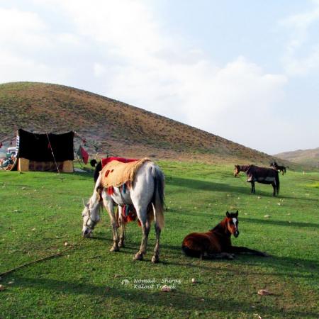 nomad-horseback-Riding-Tour-450x450 Qashqai Nomad Horseback Riding Tour
