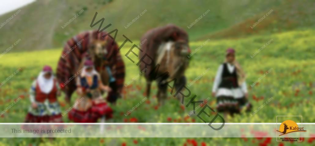 persianNomads_0-1030x478 Discover Iranian Nomad | Qashqai Nomad
