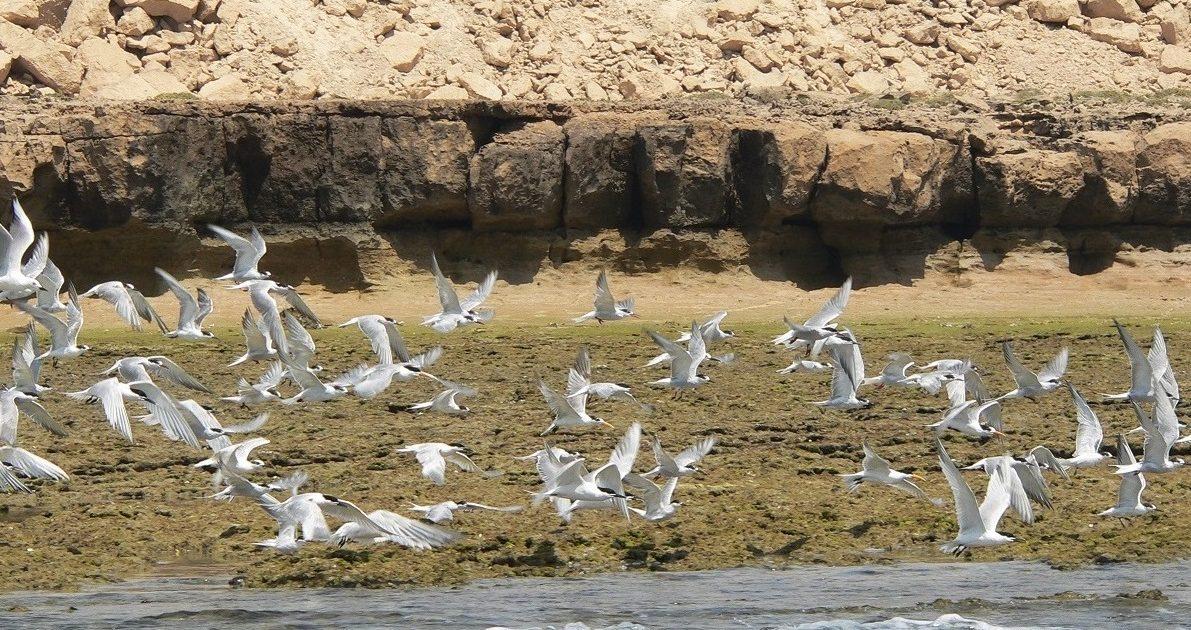 P1090490-e-3-1191x630 Caspian Sea | Persian Gulf Tour