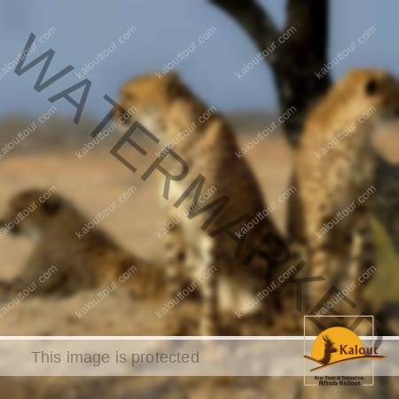 117259_738-450x450 Iran Wildlife Tour