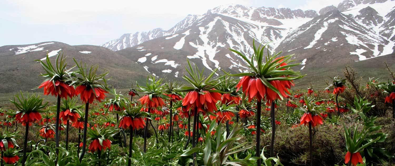 Iran-Nomad-Kouhrang Bakhtiari Nomad Tour