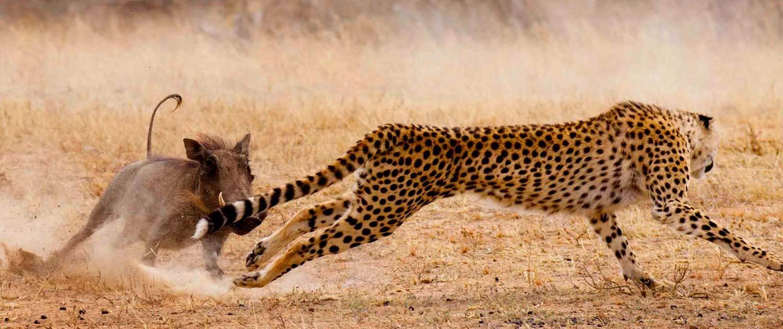 Iran-Wild-Life-Tour Iran Wildlife Tour