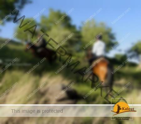 HamedanHorse-2-450x397 Iran Horseback Riding Tour