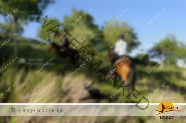 HamedanHorse-2 Iran Horseback Riding Tour