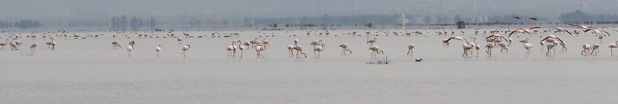 Iran National Park Tour